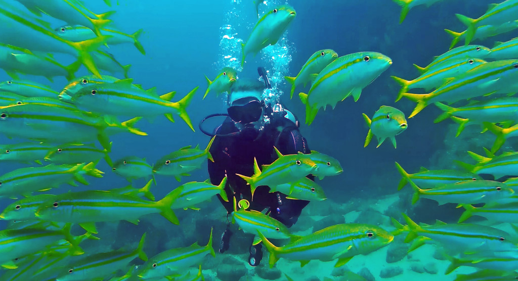 Diving in Cabo Pulmo
